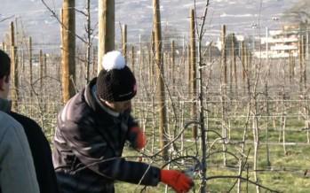 Châteauneuf: record de fréquentation à l'Ecole d'agriculture, mais répartition inégale