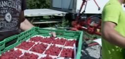 Fruits et légumes: les dessous de la composition des paniers CotCot