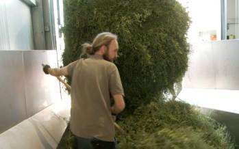 Plantes aromatiques: la moitié de la production suisse gérée par Valplantes