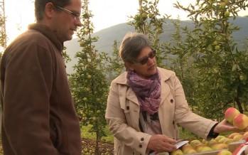 Arboriculture: à la recherche de la pomme idéale