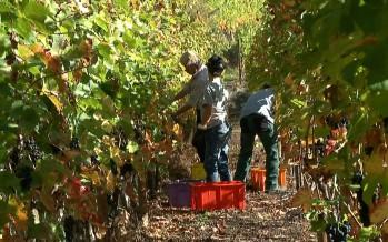 Politique de la vigne et du vin en Valais: désaccords majeurs