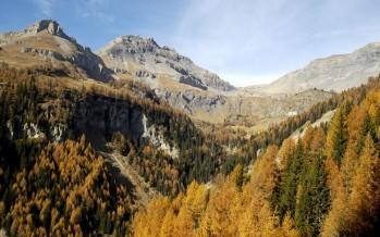 Des forêts qui sauvent des vies