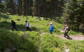Sauvegarde des forêts: Bagnes emmène le public dans les bois