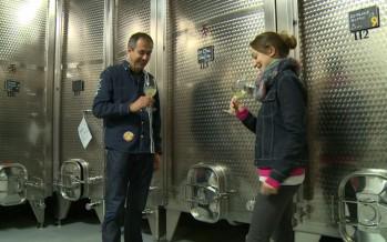 Formation: les apprentis cavistes font leur vin