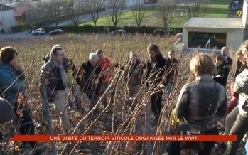 Visite du terroir viticole organisée par le WWF