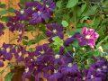 Jardin: comment bien faire son compost