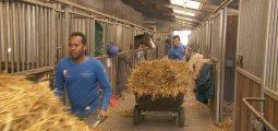 Asile: de nombreux Valaisans s'engagent pour l'accueil des migrants