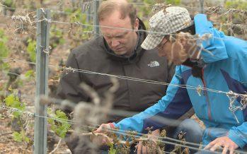 Dégâts dus au gel dans les vignes et les vergers: un groupe de travail s'active pour aider les producteurs