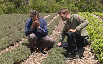 Zoom sur les huiles essentielles distillées à Icogne, avec Guillaume et Jean-Michel Mayor
