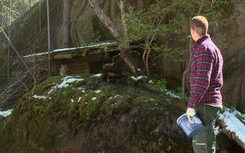 Zoom sur le Zoo alpin de Marécottes et les projets d'hôtel et de réaménagement de la famille Piasenta