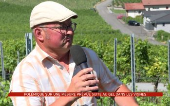 Gel d'avril: une mesure proposée par l'Interprofession de la vigne et du vin pose question
