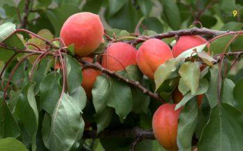A la découverte des métiers de la terre: l'arboriculture (27.06.2017)