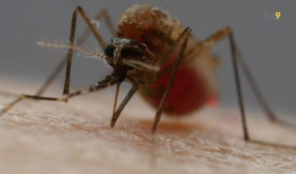 Moustiques, vecteurs de maladies