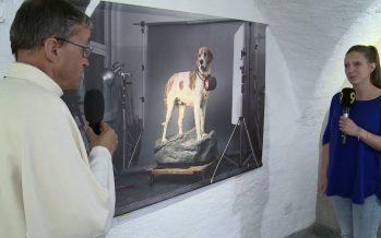 Chanoines et chiens du Saint-Bernard: un lien qui remonte au XVIIe siècle déjà