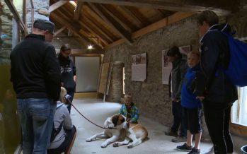 Col du Grand-Saint-Bernard: les chiens dans un nouvel espace qui plaît (aussi) aux visiteurs