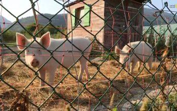 Agriculture: 12,4% des fermes valaisannes ont fait le choix du BIO. Découverte chez Bioterroir à Bramois