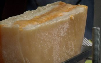 Chèvre, brebis et vache dans une même meule: un cocktail de fromage pour une raclette innovante
