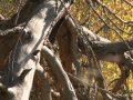 Sécheresse: le manque d'eau chronique met en danger les forêts valaisannes. Et les pluies du week-end ne suffiront pas