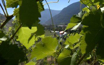 Le chef de l'Office cantonal de la viticulture met en garde: «Les produits phytosanitaires, ce n'est pas quelque chose d'anodin. Leur utilisation doit être bien maîtrisée.»