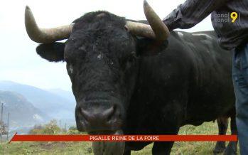Pigalle, reine de la Foire du Valais, a retrouvé le calme des prairies de Chermignon