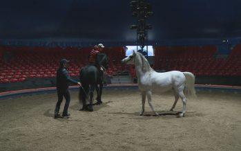 Dans les coulisses du cirque Knie, à l'heure des répétitions avec les chevaux