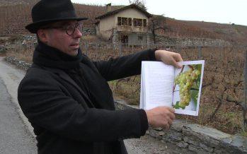 Rèze, neyrun, humagne blanc: José Vouillamoz dresse l'arbre généalogique des cépages cultivés en Suisse. Et les présente dans un livre