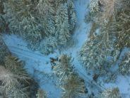 Les forêts valaisannes, une année après un hiver destructeur et un été torride