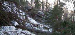 Vents violents, avalanches et inondations: Eleanor n'a pas épargné la forêt valaisanne