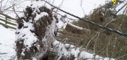 «Le bruit des bourrasques nous a réveillés. Tout d'un coup, l'arbre est tombé!»