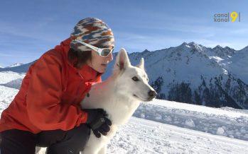 Formation pour chiens d'avalanche à Siviez: les animaux et leurs conducteurs mis dans des conditions proches de la réalité