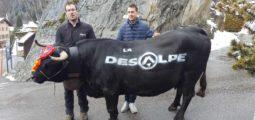 Cyclotourisme: Sébastien Reichenbach lance sa «Désalpe»