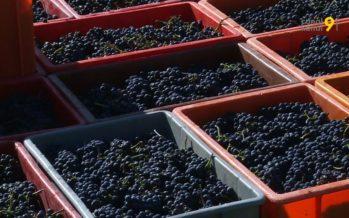 Levée exceptionnelle de l'interdiction de couper le vin AOC après le gel de 2017: premier bilan de la mesure prise par le Valais