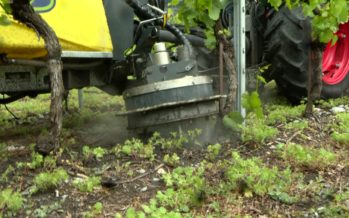 L'Office de la viticulture teste une machine pour désherber utilisant uniquement de l'eau