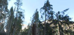 Après un hiver rigoureux, les forêts valaisannes souffrent d'attaques de bostryche. Les professionnels demandent plus de moyens