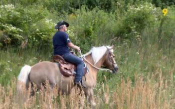 Pas besoin d'être un cavalier aguerri pour profiter des belles randonnées à cheval à Erschmatt