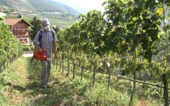 Atomiseur électrique pour la vigne: ValnaturePro se déploie sur le marché international grâce à Birchmeier