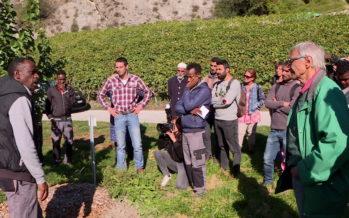 Ecole d'agriculture de Châteauneuf: des formations dispensées à des immigrés valaisans, présentées à un groupe de réfugiés vaudois