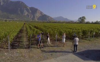 «On n'a jamais été aussi bon», se réjouit l'œnologue cantonale Corinne Clavien, à propos de la qualité des vins valaisans