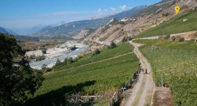 «Toujours plus, le consommateur veut savoir ce qu'il boit, d'où vient le vin et comment est travaillée la vigne», dit le président de Vitival