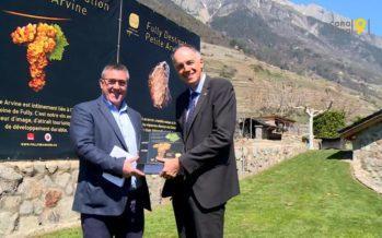 Fully Destination Petite Arvine: le premier projet de développement régional viticole en Suisse avance vite
