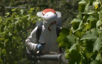 Premier verger et vignoble de la Suisse, le Valais veut réduire les risques liés aux produits phytosanitaires