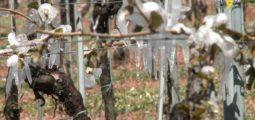 Politique agricole PA22+: le Valais prend position et demande une «assurance récolte»
