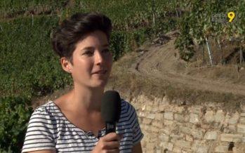 «Les vignes en terrasses et leurs murs en pierres sèches font l'identité du Valais», explique Sarah Besse. Qui se bat pour leur maintien