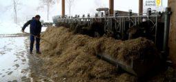 Zoom sur la filière de la viande. Episode 1: l'élevage et l'abattage