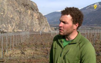 Viticulture: «Le bio, pour moi, c'est une recherche de qualité». Mikaël Magliocco explique sa démarche sur le domaine familial