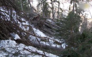 Changements climatiques: les forêts valaisannes sont en profonde mutation