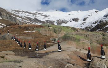 Un intrigant alignement de bouteilles de Petite Arvine sur les hauts de Fully, à 2000 mètres d'altitude…