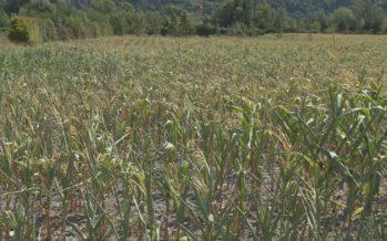 Un été chaud chaud chaud… Comment l'agriculture valaisanne a-t-elle vécu la canicule?
