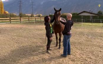 """""""La Bouche qui rit"""", un refuge qui sauve les chevaux"""