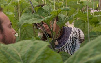 Agroscope à Conthey: l'avenir de la recherche agronomique en Valais est assuré